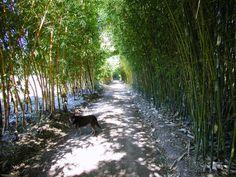 bamboo landscape architecture - Google 검색