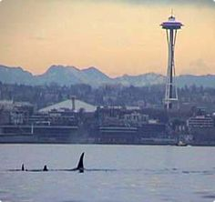 Whale watching in Seattle