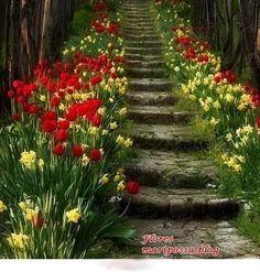garden - gardening - garden steps - flowers - tulips - garden design and architecture Stairway To Heaven, My Secret Garden, Parcs, Dream Garden, Daffodils, Tulips Garden, Flower Gardening, Garden Paths, Garden Steps