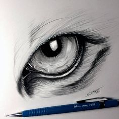 Tiger Eye Drawing by LethalChris.devia… on Tiger Eye Drawing by LethalChris. Realistic Animal Drawings, Realistic Eye Drawing, Cartoon Drawings, Pencil Drawings, My Drawings, Cool Eye Drawings, Marker Drawings, Drawing Tips, Drawing Ideas