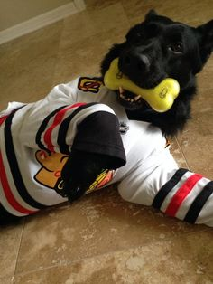 Blitz is dressed for game time and playtime! #HockeyPets