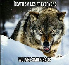 I have done it so many times! It's gotten to the point that it ain't luck. Ever since childhood I have stared at death himself and winked. Every time I have come out unscathed, It isn't my time. Wolf Qoutes, Lone Wolf Quotes, Saarloos, Angry Wolf, Alpha Wolf, Wolf Stuff, Wolf Spirit Animal, Wolf Wallpaper, Wolf Love