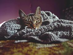 sleepy kitty by Karo Solo  #photography #nature #animals #cats