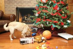 Great #holiday gifts for your #pets this year!