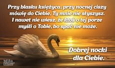 Nostalgia, Romantic, Humor, Reading, Quotes, Pictures, Google, Polish, Quotations