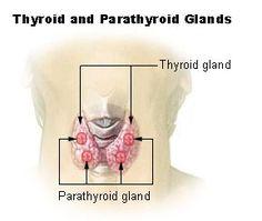 Location of thyroid gland
