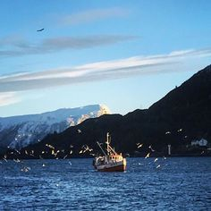"""A fishing boat sailing to the harbor with its catch followed by 50 lucky seagulls and 2 eagles. A completely normal sight on """"my island"""" in western Norway where I grew up.  """"You can take the girl out of the island, but you can never take the island out of the girl."""""""