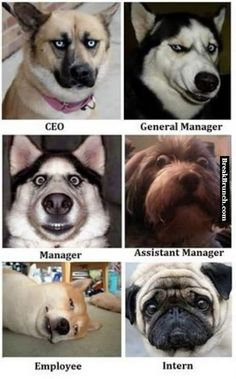 Role of employee as dog in company - http://breakbrunch.com/funny-picture-2247