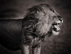 I Am LEO Hear Me Roar!