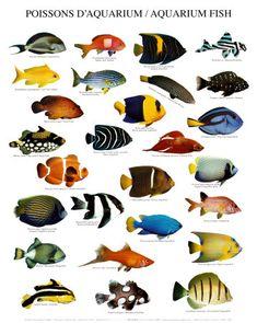 Freshwater Aquarium Fish Chart
