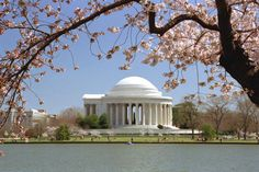 #ridecolorfully to the Jefferson Memorial when the cherry blossoms are blooming.  #katespadeny #vespa