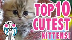 Top 10 Cutest Kittens.#FunnyCat #FunnyKittens #LOL #Humor #Cats #Kittens #Cute #CuteCats #CuteKittens