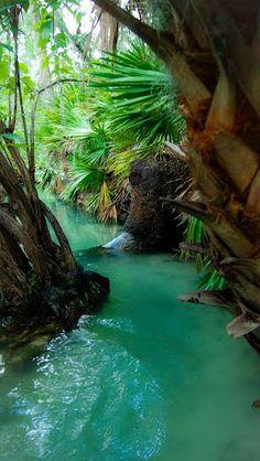 Blue Spring State Park - Florida