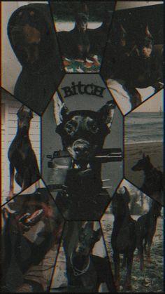 Perro Doberman Pinscher, Doberman Dogs, Dobermans, Bad Girl Wallpaper, Cute Emoji Wallpaper, Black Doberman, Black Aesthetic Wallpaper, Creepy Pictures, Cartoon Profile Pictures