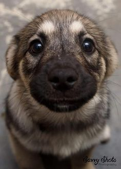 Just in case you haven't smiled yet today ❤️ Dog love Cute Baby Animals, Animals And Pets, Funny Animals, Nature Animals, German Shepherd Puppies, German Shepherds, Shepherd Dogs, Rottweiler, I Love Dogs