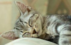 sleeping-kitty-600x383.jpg (600×383)
