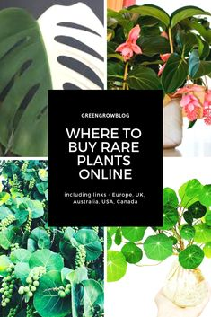 Living a Green Life secret sources to buy rare plants online - uk, usa, canada, europe, australia Wh Unusual Plants, Rare Plants, Exotic Plants, Small Plants, Cool Plants, Tropical Plants, Flowers Australia, Buy Plants Online, Edible Plants