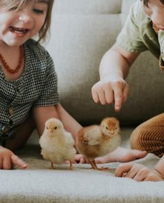 Babes and chicks. Funny Animals, Cute Animals, Tiny Farm, Farm Lifestyle, Baby First Foods, Animal Magic, All Gods Creatures, Baby Chicks, Family Kids