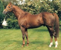 Anshan(1987)(Colt) Persian Bold- Lady Zi By Manado. Outcross In First 5 Generations. 21 Starts 6 Wins 3 Seconds 8 Thirds. Won San Bernardino H(US-2), Supreme S(Eng-3), Pinjara H(US-RT), European Free H(Eng-L), 2nd Californian S(G1), San Antonio H(G2), Challenge S(Ire-2), 3rd Dewhurst S(Eng-1), Hollywood Derby(G1T), 2000 Guineas(Eng-1), Dante S(Eng-1), Mervyn Leroy H(G1T), Carrier Million S(Ire-L). Died In 2005.