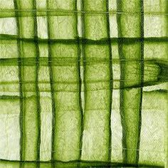paper made from cucumbers