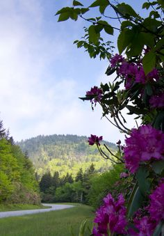 Explorers of the Blue Ridge Parkway: Discover the tales, trails, wildflowers, wildlife and (of course) scenic views behind Americas Favorite Drive.