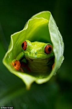 A folk painter blends in to her background in one eye-catching picture taken in Kolkata, India, while right, a small frog peers out from inside a plant in another beautiful image