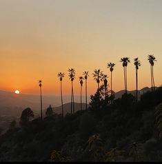 City Of Angels, Late Nights, Bel Air, Palm Trees, Celestial, Sunset, Life, Outdoor, Partying Hard