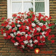 Container Gardening Ideas Best 40 Beautiful Cascading Flowers For Window Boxes Ideas Container Flowers, Flower Planters, Container Plants, Container Gardening, Hydroponic Gardening, Window Box Flowers, Window Boxes, Flower Boxes, Cascading Flowers