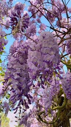 Spring is the coolest season if you like to enjoy nature life. It gives hope to see all these life's rebirth: wisteria, cherry tree, and all the flowers. Take time to walk the streets around you and enjoy it! Aesthetic Photography Nature, Nature Photography, Travel Photography, Photography Flowers, Beautiful Flowers Wallpapers, Beautiful Photos Of Nature, Australian Native Garden, Flower Aesthetic, Aesthetic Drawing