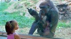 Try Not To Laugh or Grin Watching Funny Kids vs Animals Vines Compilatio...