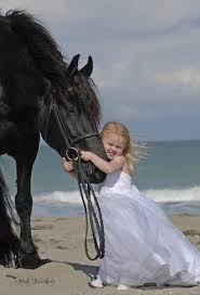 ~ friesian Horse ~