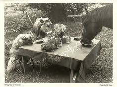 """Dining Out In Vermont-black and white animal themed poster print 18""""x24"""". $25.00, via Etsy."""