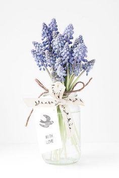 The Floral Alchemist ~ Bloomspiration. Muscari Flowers, Flowers In Jars, Bulb Flowers, Pansies, Floral Flowers, Flower Vases, Florals, Spring Flowering Bulbs, Spring Blooms