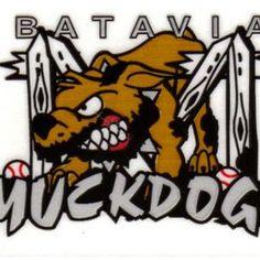 Bativia, NY Class -A, NY-Penn League. Cardinals farm team