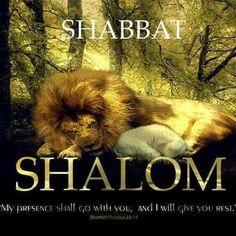 Shabbat shalom,  Lion & Lamb lie down to rest.