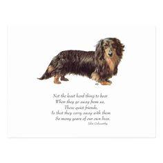 Dapple Dachshund Puppy, Dachshund Puppies For Sale, Long Haired Dachshund, Dachshund Tattoo, Puppy Names, Puppy Clothes, Rainbow Bridge, Postcard Size, Backdrops