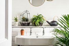quelles plantes vertes pour une salle de bain