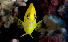 Pitcairn Islands Expedition Photos: A World in One Coral   National Geographic (blogs)