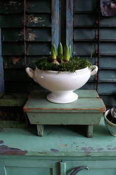 house plants in old white dishes.