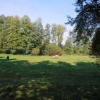 Koniki polskie w Zwierzyńcu k. Zamościa. Golf Courses, Park, Parks