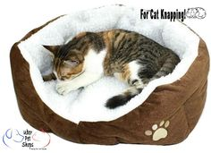 Dream heavan for Kitty! https://www.uberpetshops.com/products/pet-soft-bedding-house-nest-pad CLICK HERE NOW FOR A COMFY KITTY!