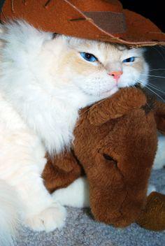 Western Cat by DaniDinosaurable.deviantart.com on @deviantART