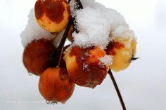 Apples by MiiaMatikkala. @go4fotos