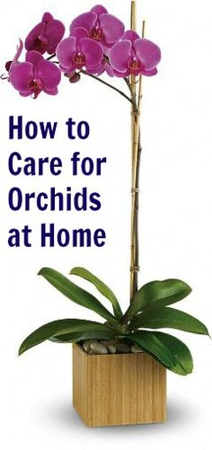 How to Care for Orchids at Home I have always seen these, and wanted one for my home, but with the price, I wasn't sure, bc I didn't know how to care for them. Now, with this, I just might purchase one :)