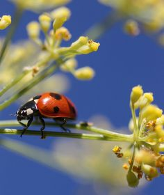 Ladybird - when found equals good luck (in western feng shui).