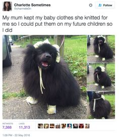 This dog is a lil' baby. | 26 Picture Tweets That Prove We Don't Deserve Dogs