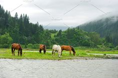 Horse Photos A horse in a river on a background of mountains by byrdyak