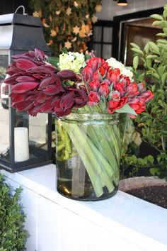 A sleek, modern arrangement of burgundy amarillis, rococo parrot tulips, and green hydrangea.