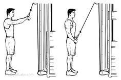 Straight Arm Pulldowns / Pull Downs