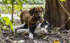 Difficult Dog Breeds – Small Dogs Not for Newbies – Animal Facts Cat Dog, Dachshund Dog, Wiener Dogs, Dachshunds, Little Dogs, Small Dog Breeds, Small Dogs, Cat Breeds, Cute Kittens